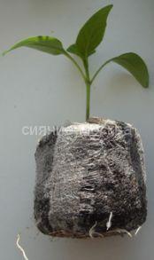 Торфо-перегнойные таблетки для рассады Jiffy, 33 мм