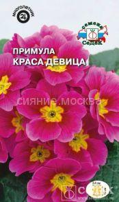 Семена примулы Краса девица