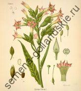 "Табак ""Дэлголд"" (Delgold) 10 семян"