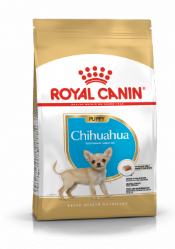 Чихуахуа Паппи-Юниор (Chihuahua Puppy-Junior)
