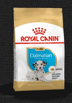 Далматин юниор (Dalmatian Junior)