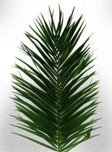 Листья пальмы (2 метра.)