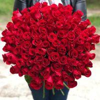 101 красная роза 60см (ЭКВАДОР)