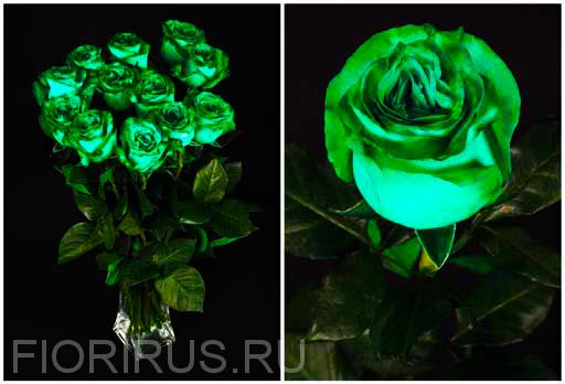 Роза Эквадор Грин (Green)