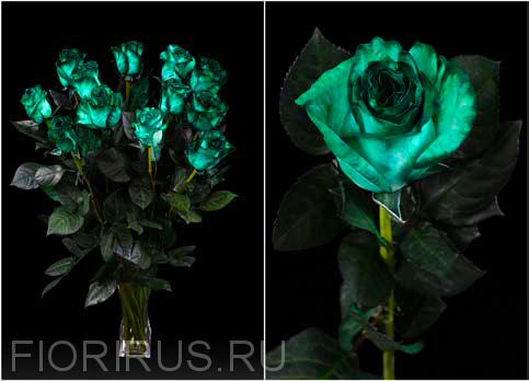 Роза Эквадор Грин интэнс (Green Intense)