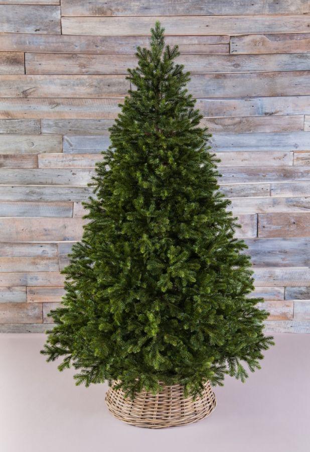Триумф Можжевельник 260 см зеленый