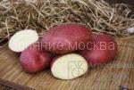 kartofel-mayak
