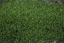 Бисер чешский 51220 прозрачный зеленый радужный Preciosa 1 сорт