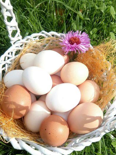 Яйцо куриное домашнее (10 шт)