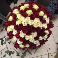 101 роза - Красные и белые (60 см)