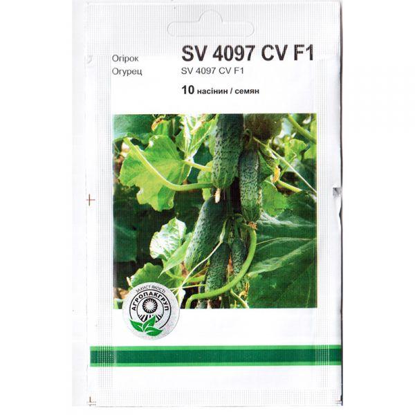 """""""SV 4097 CV"""" F1 (10 семян) от Monsanto, Голландия"""