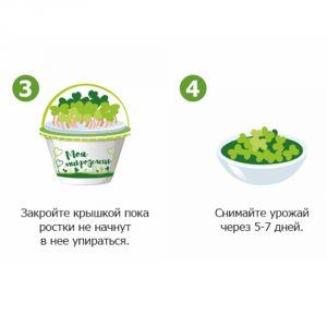 Набор для выращивания Моя микрозелень Брюква