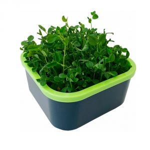 Проращиватель Моя микрозелень
