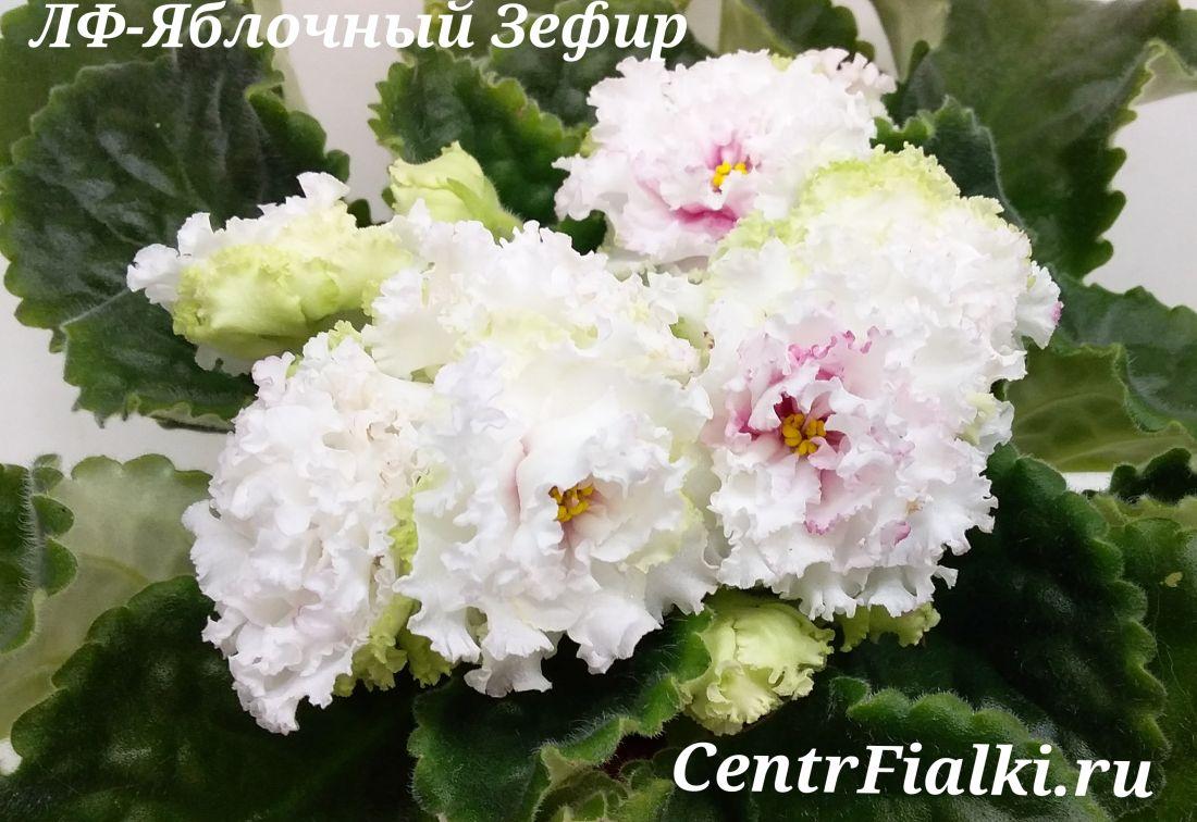 ЛФ-Яблочный Зефир (Л.Федосеева)