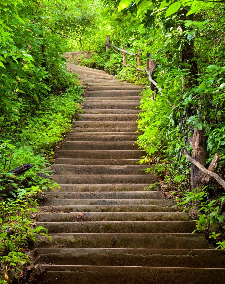 Лестница в лесу 14-14