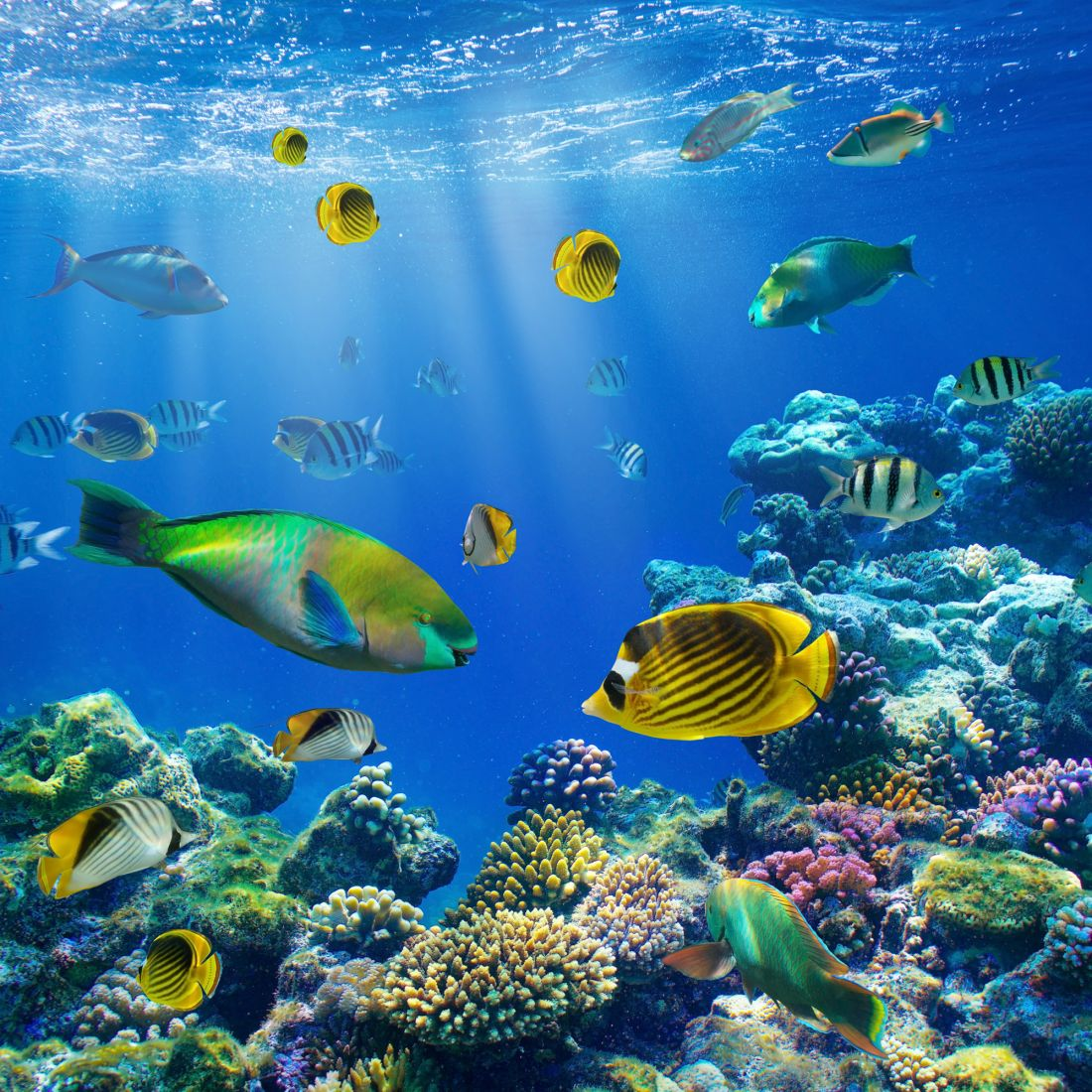 Подводный мир 9-101