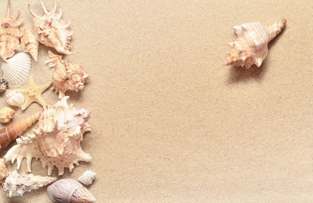 Ракушки на песке 9-084