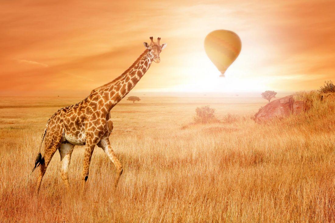 Жираф 3-160