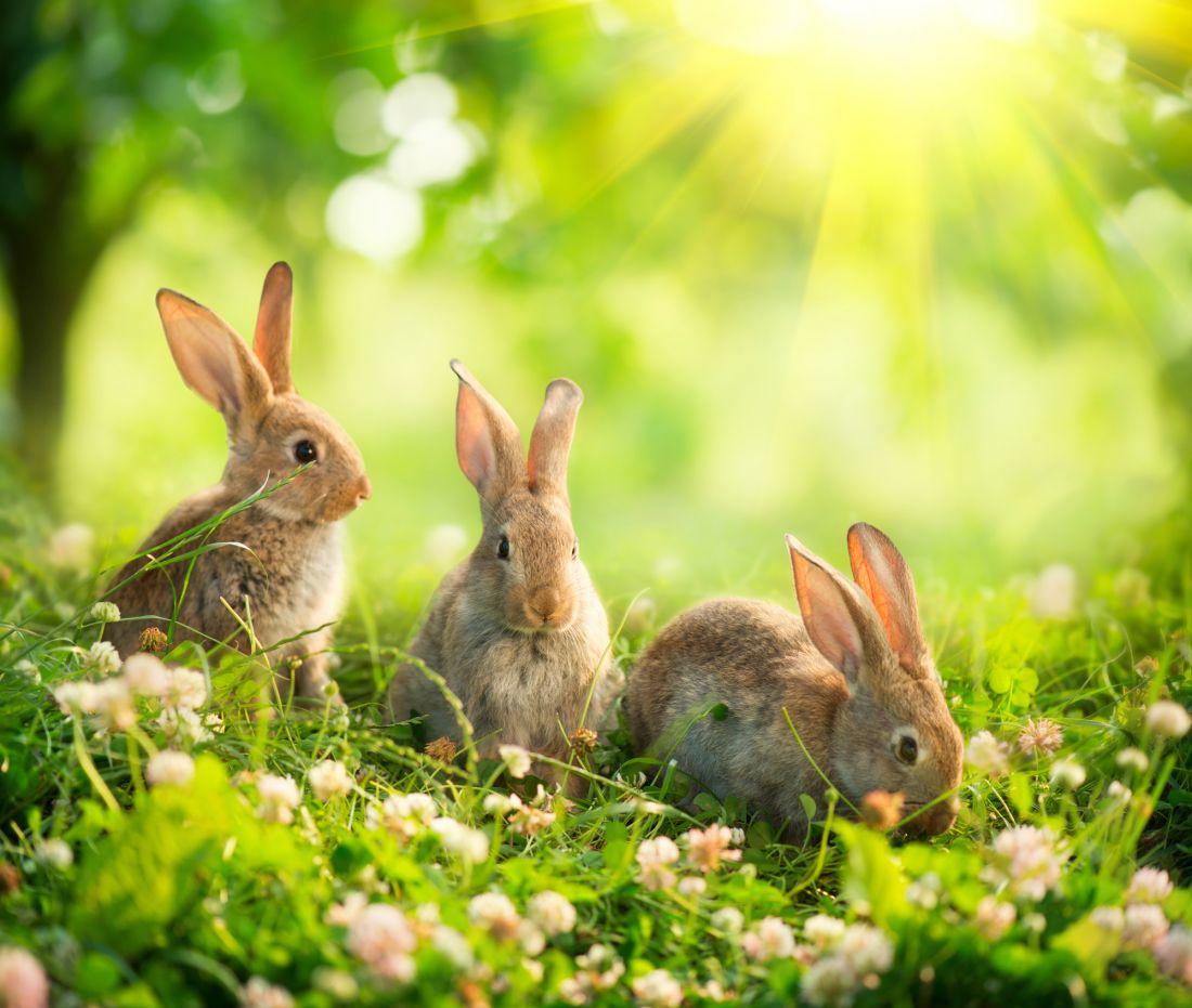Зайцы на лужайке 3-071