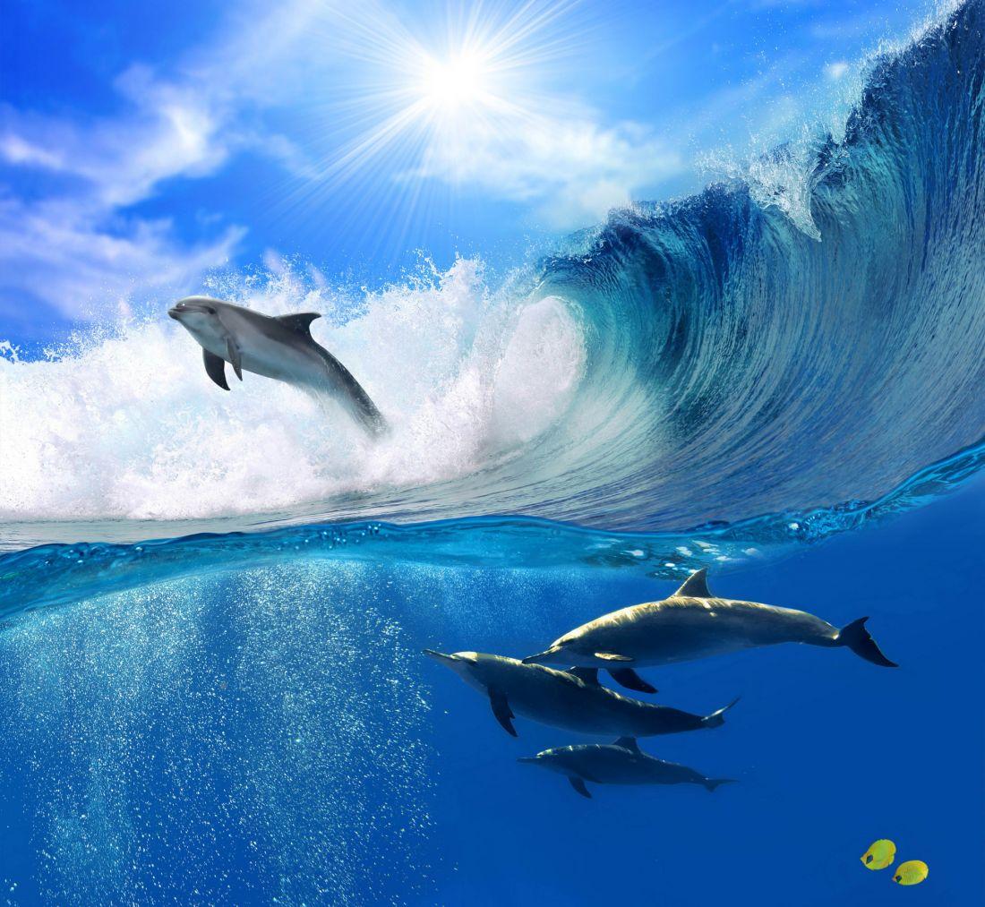 Дельфины 3-017