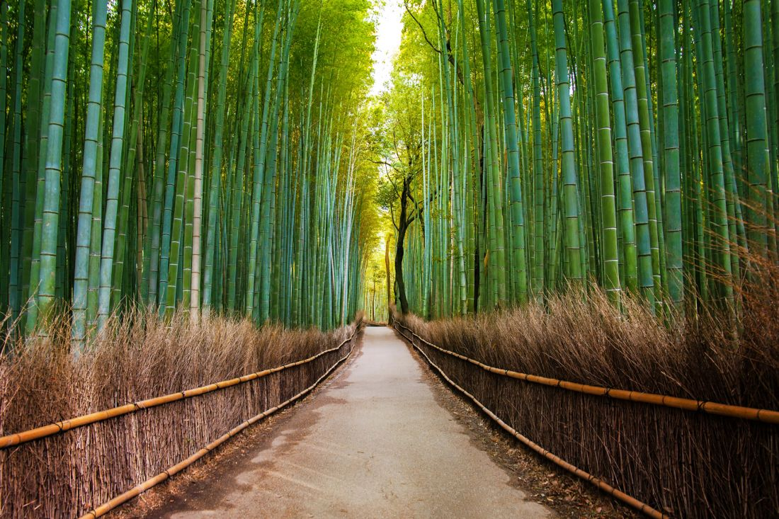 Бамбуковый лес 10-262