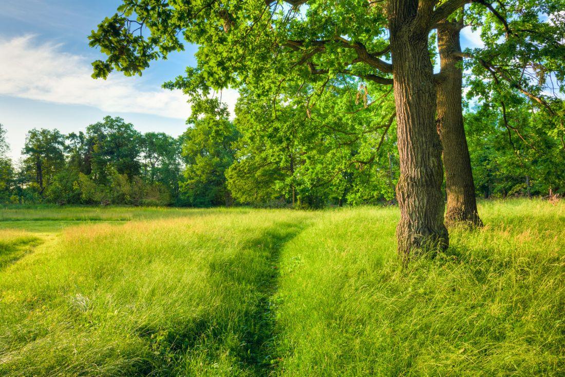 Деревья у тропинки 10-166