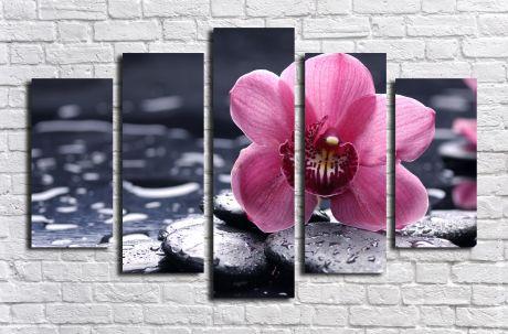 Модульная картина Розовая орхидея на камнях