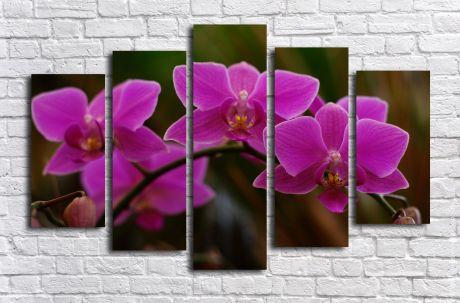 Модульная картина Фиолетовая орхидея