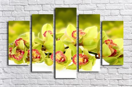 Модульная картина Зеленые орхидеи