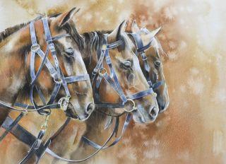 Postcard Horses