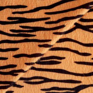 Мелковорсовый мех тигр (плюш) 50*37 см.