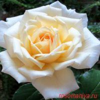 Ирина (Irina)