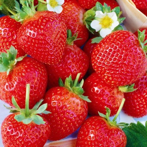 Хоней саженцы клубники (Honeoye Strawberry)10шт