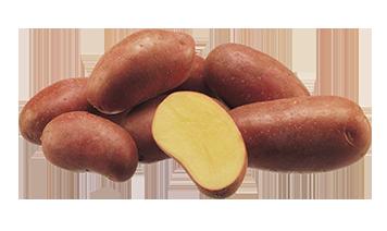 Картофель сорта Эсми
