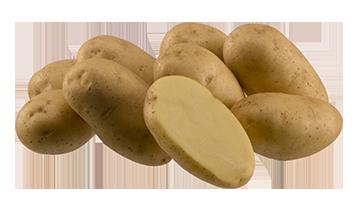 Картофель сорта Импала10шт