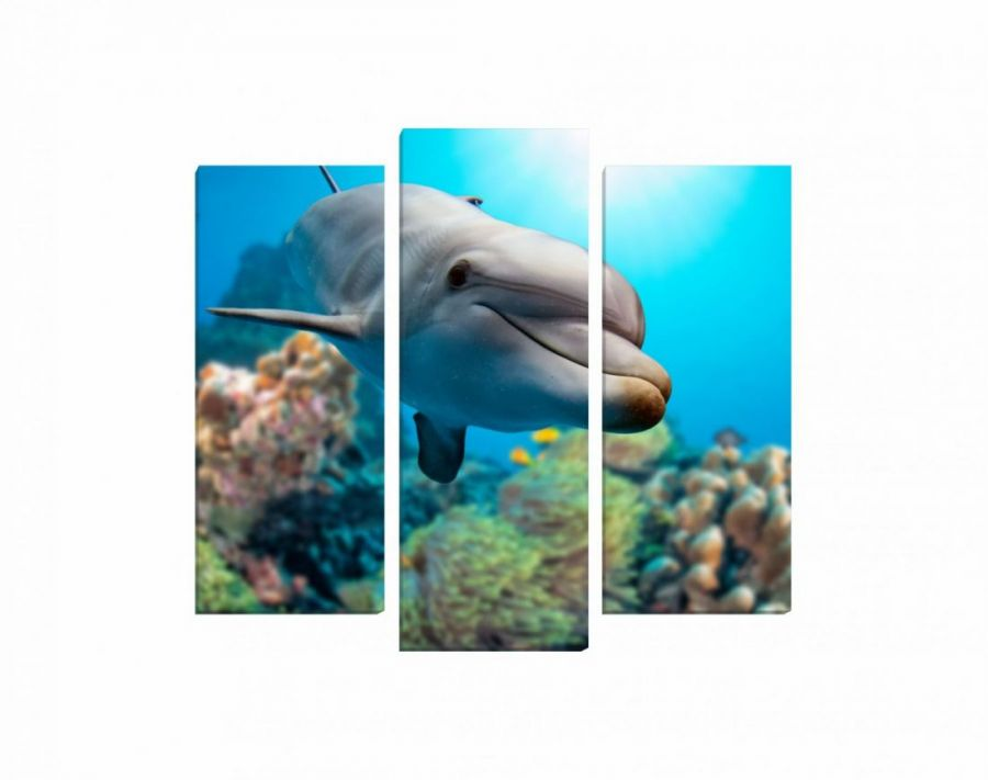 Модульная картина Веселый дельфин